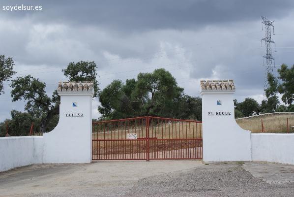 Ganadería Soto de la Fuente-Turismo taurino